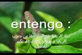 سكس عنيف ومترجم عربي